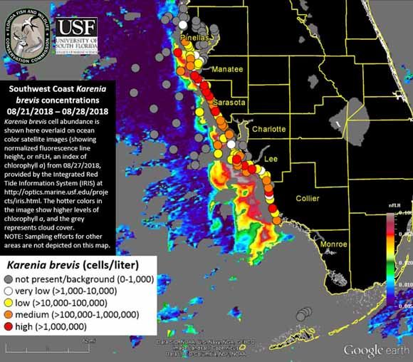Red Tide Map, Update: High Concentrations of Algae Found Offshore