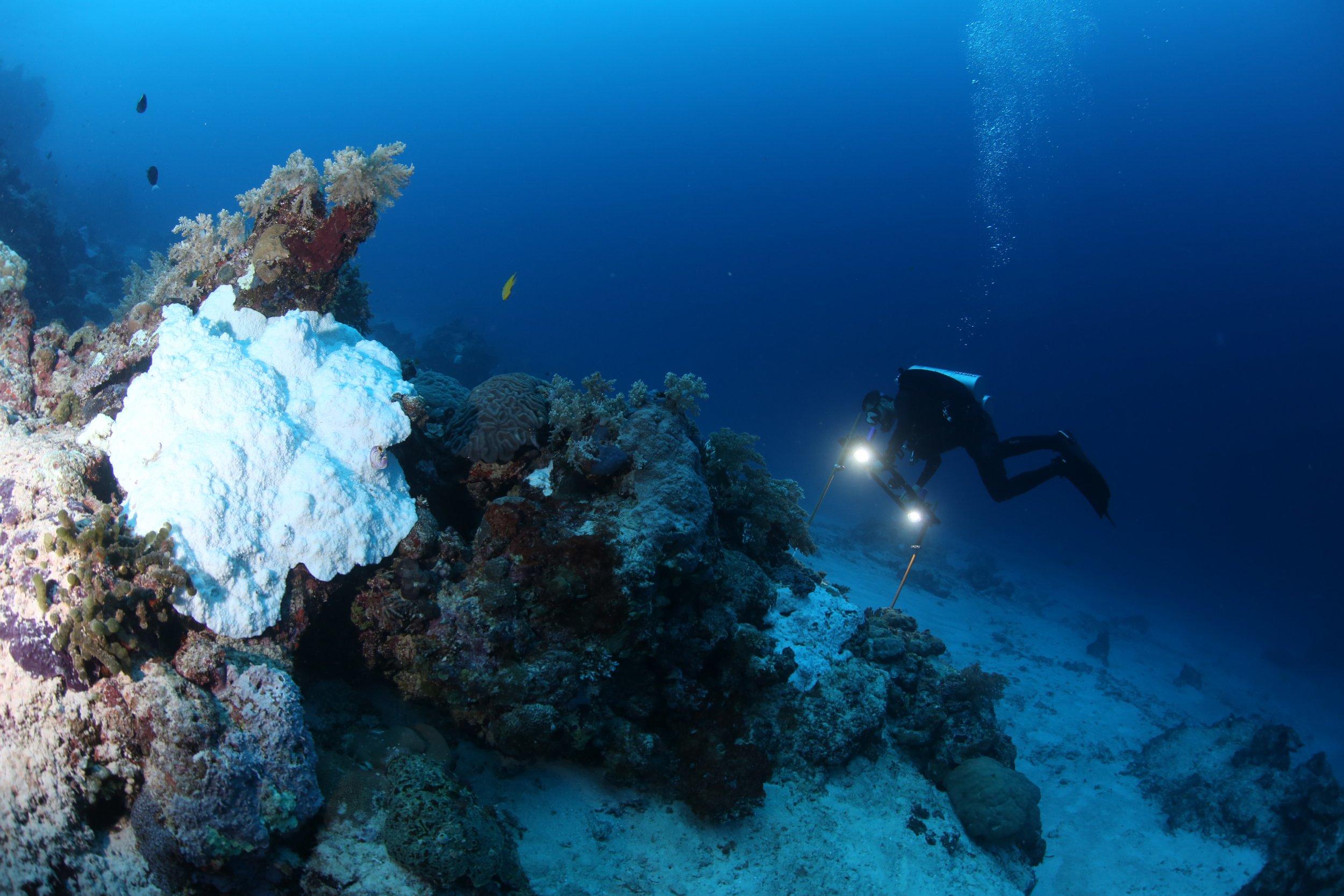9_4_Deep Coral Survey