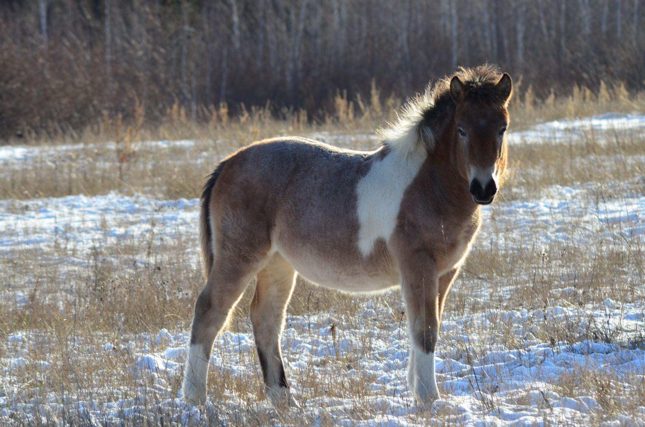 9_5_Horse