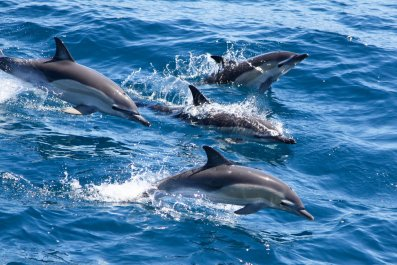 9_10_Dolphins