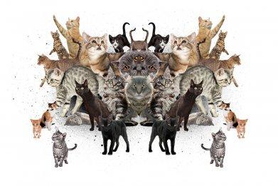 FE_CatKillers_01