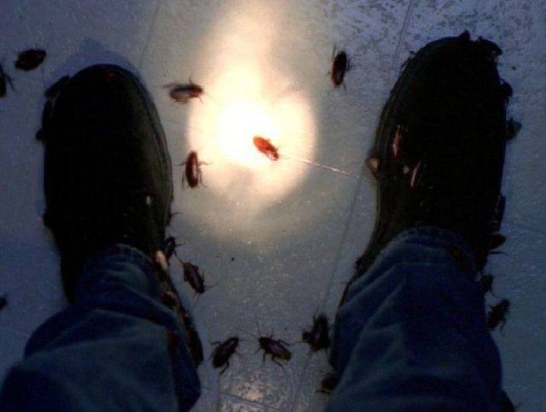x-files-war-of-coprophages