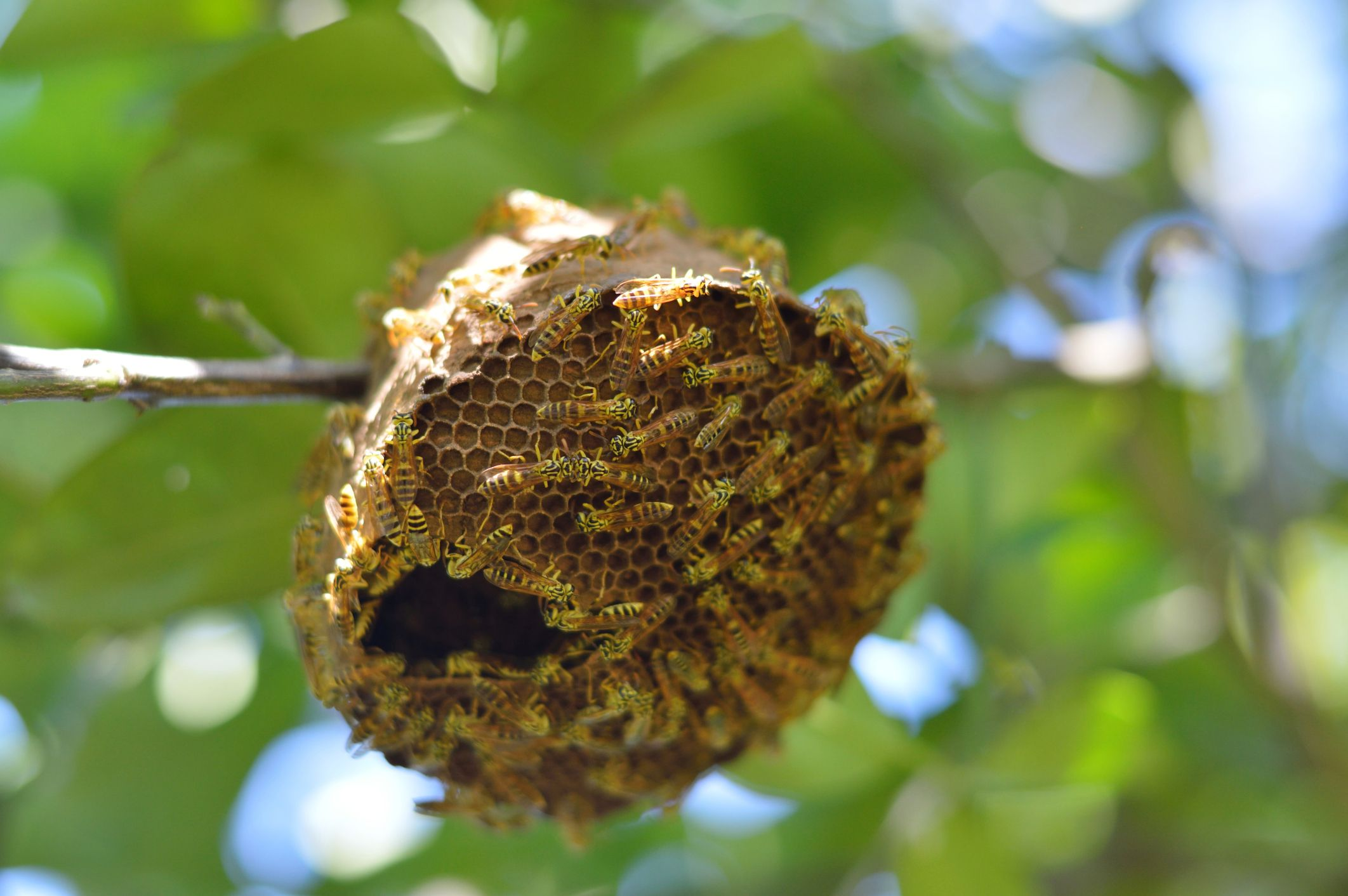9_12_Wasp's Nest