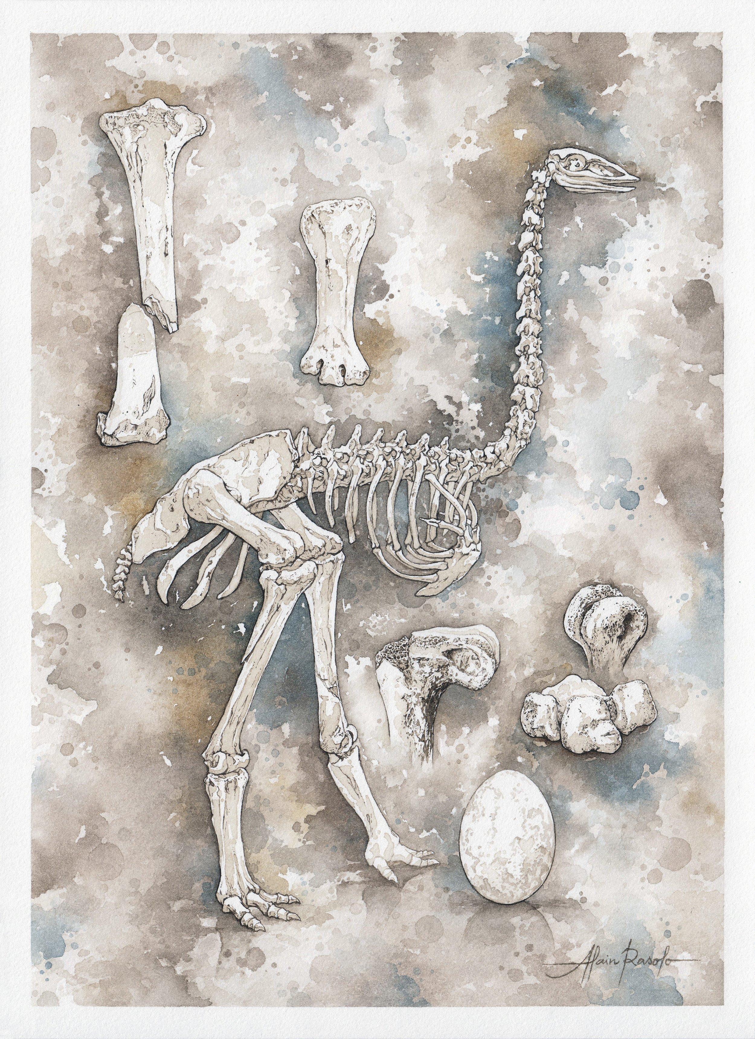 9_12_Elephant Bird