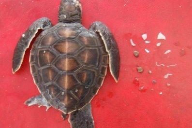 9_13_Turtle plastic