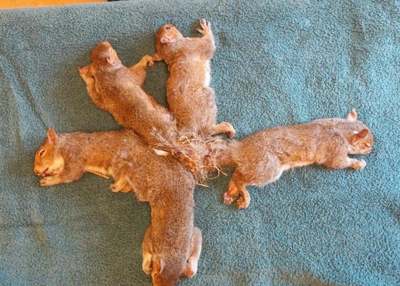 9_17_Squirrels