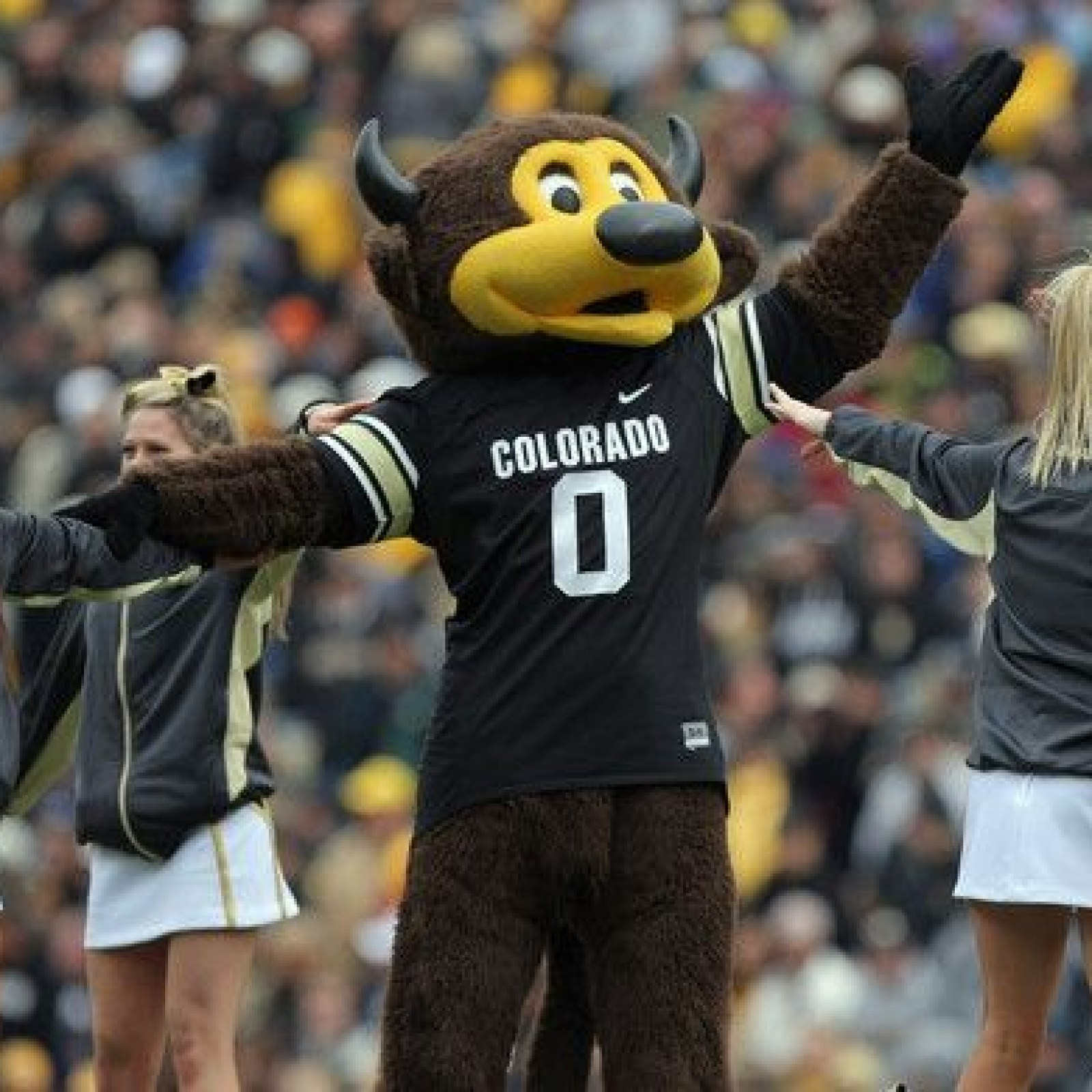 Colorado Buffaloes Mascot Shoots Himself In The Groin After