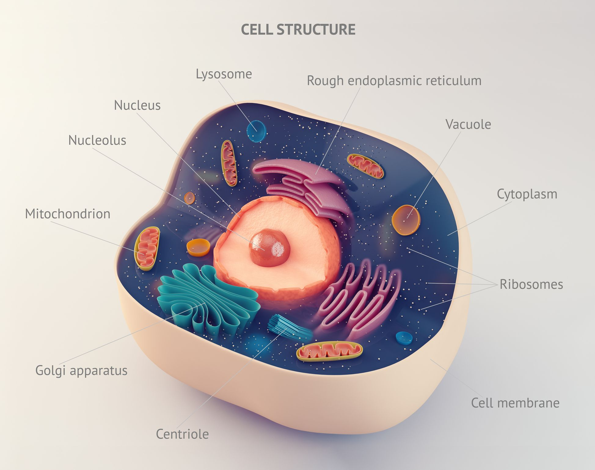cell-structure-stock