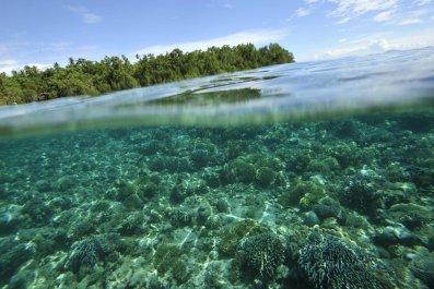 mangrove blue carbon