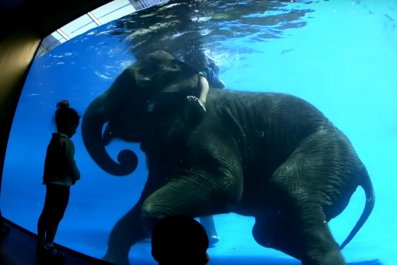 elephant underwater tricks zoo