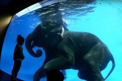 elephant underwater tricks zoo