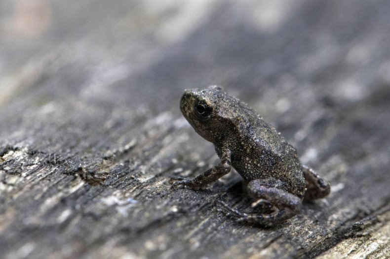 Baby toad
