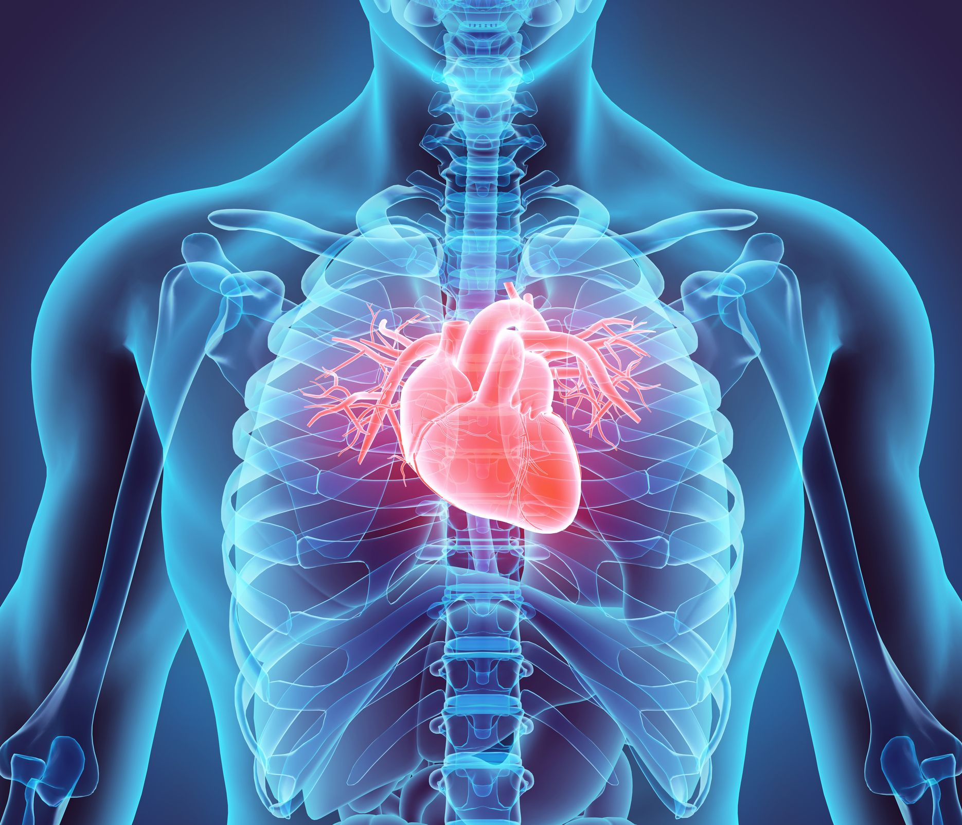 Scientists Grow Beating Human Heart Tissue From Stem Cells