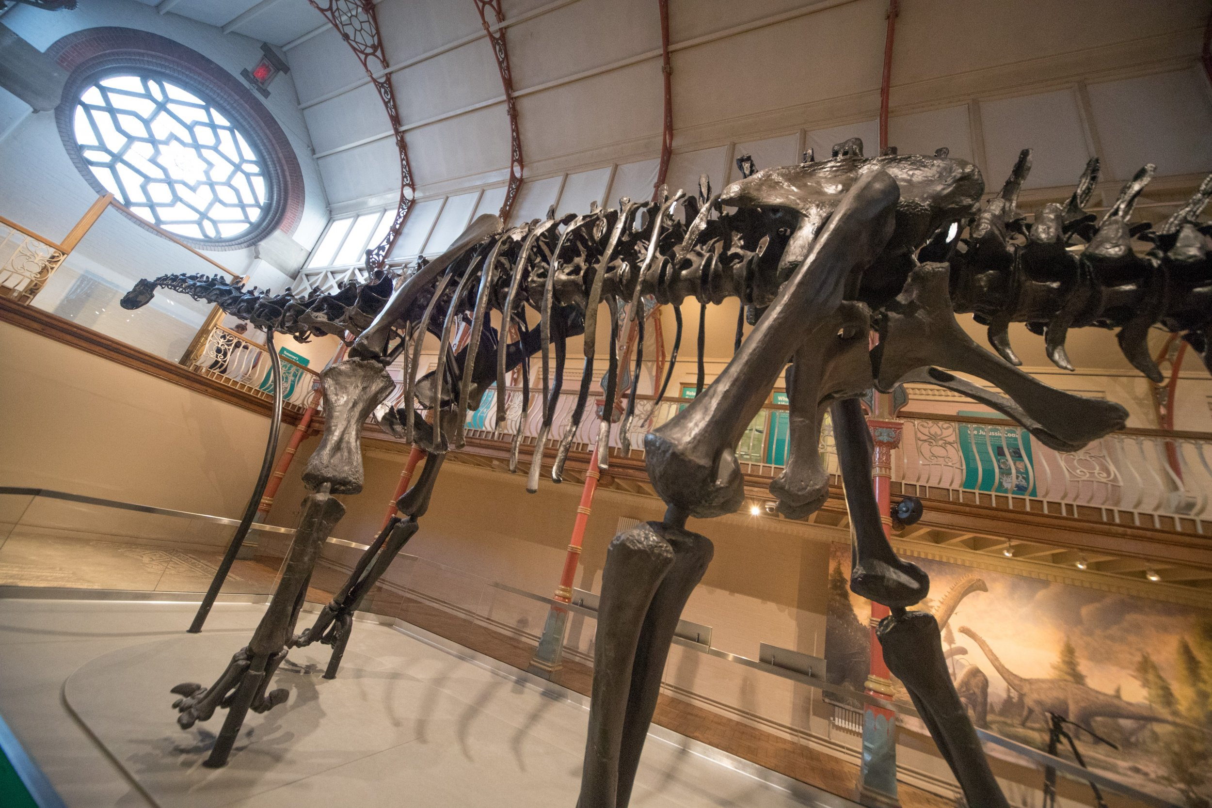 Diplodocus dinosaur skull found montana
