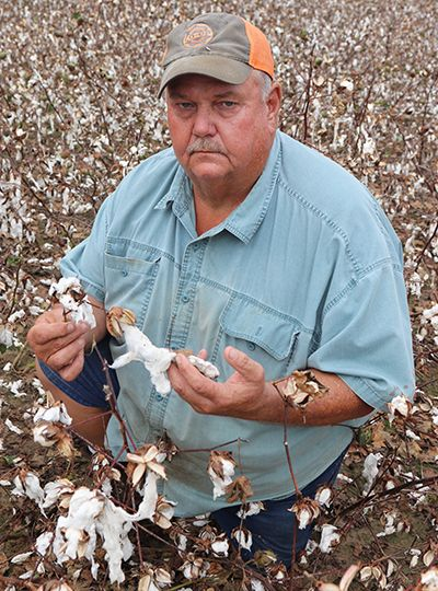 Hurricane Michael Damages Cotton Crop