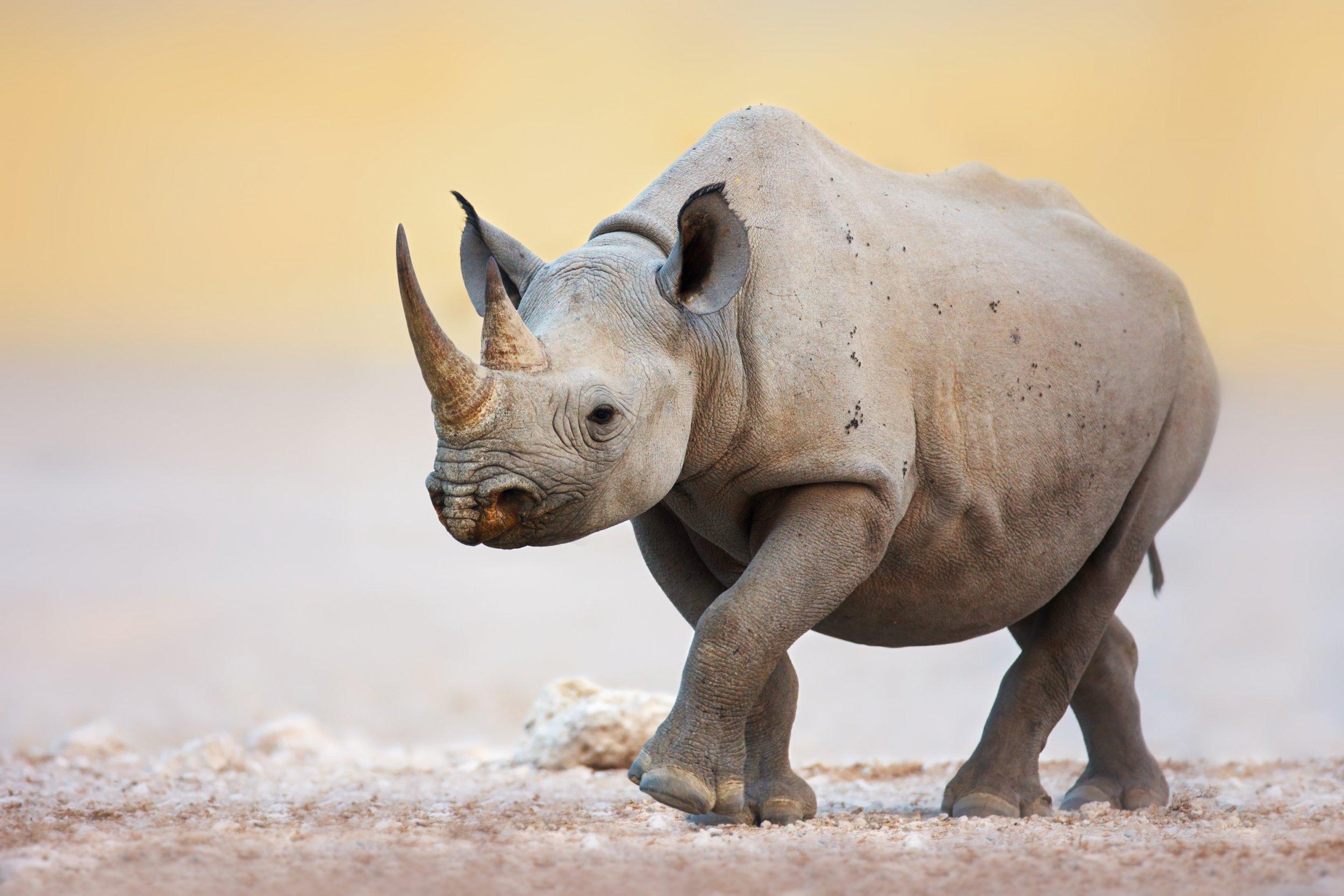 10_16_Black Rhino
