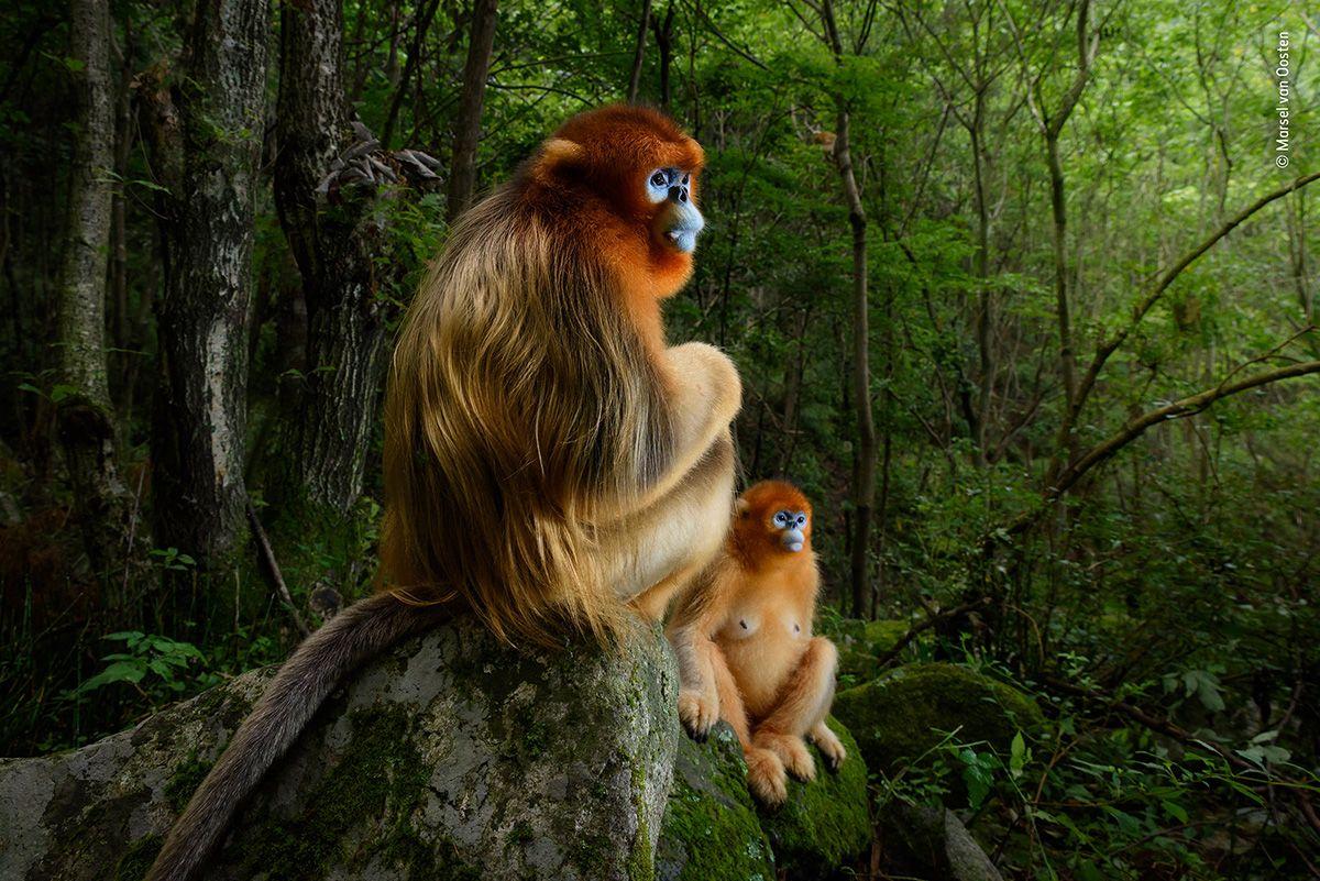 01 © Marsel van Oosten - Wildlife Photographer of the Year