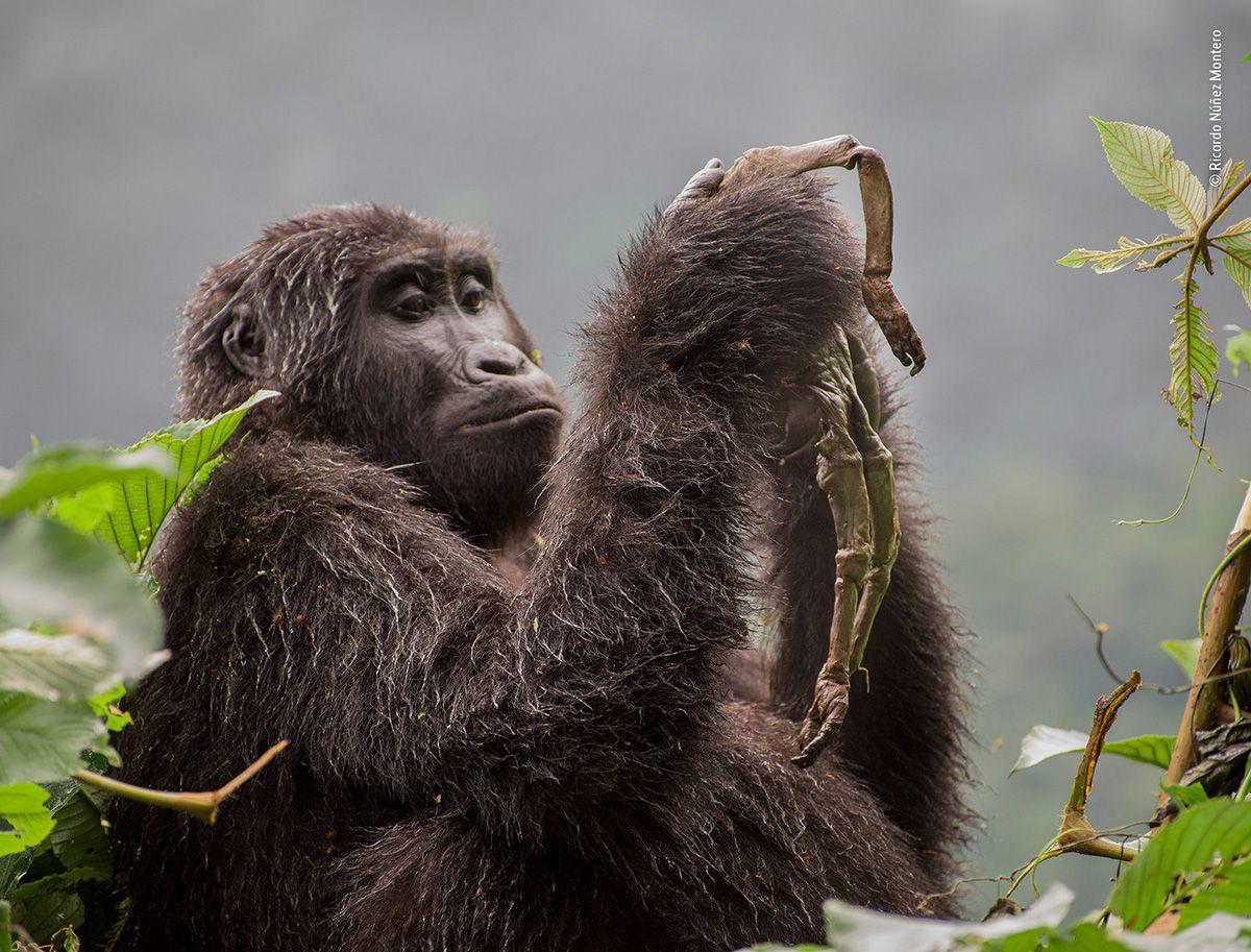04 © a Ricardo Núñez-Montero - Wildlife Photographer of the Year