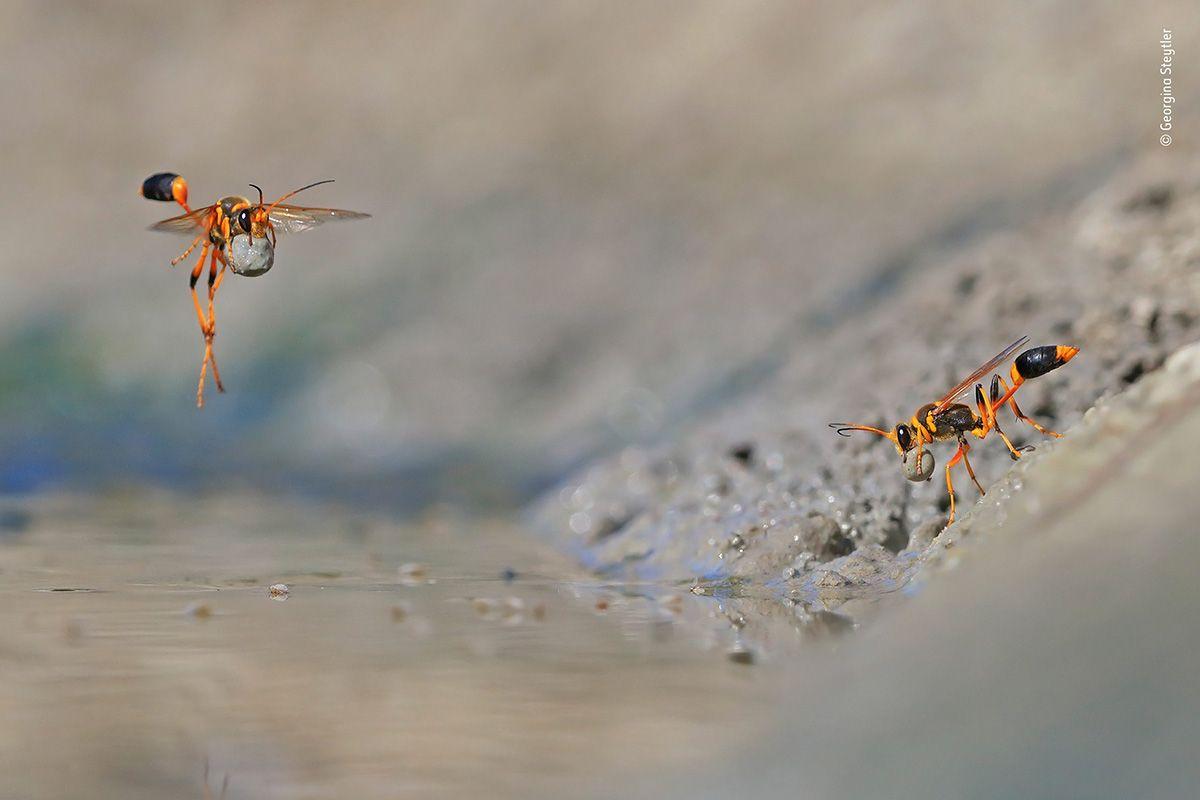 04 © d Georgina Steytler - Wildlife Photographer of the Year