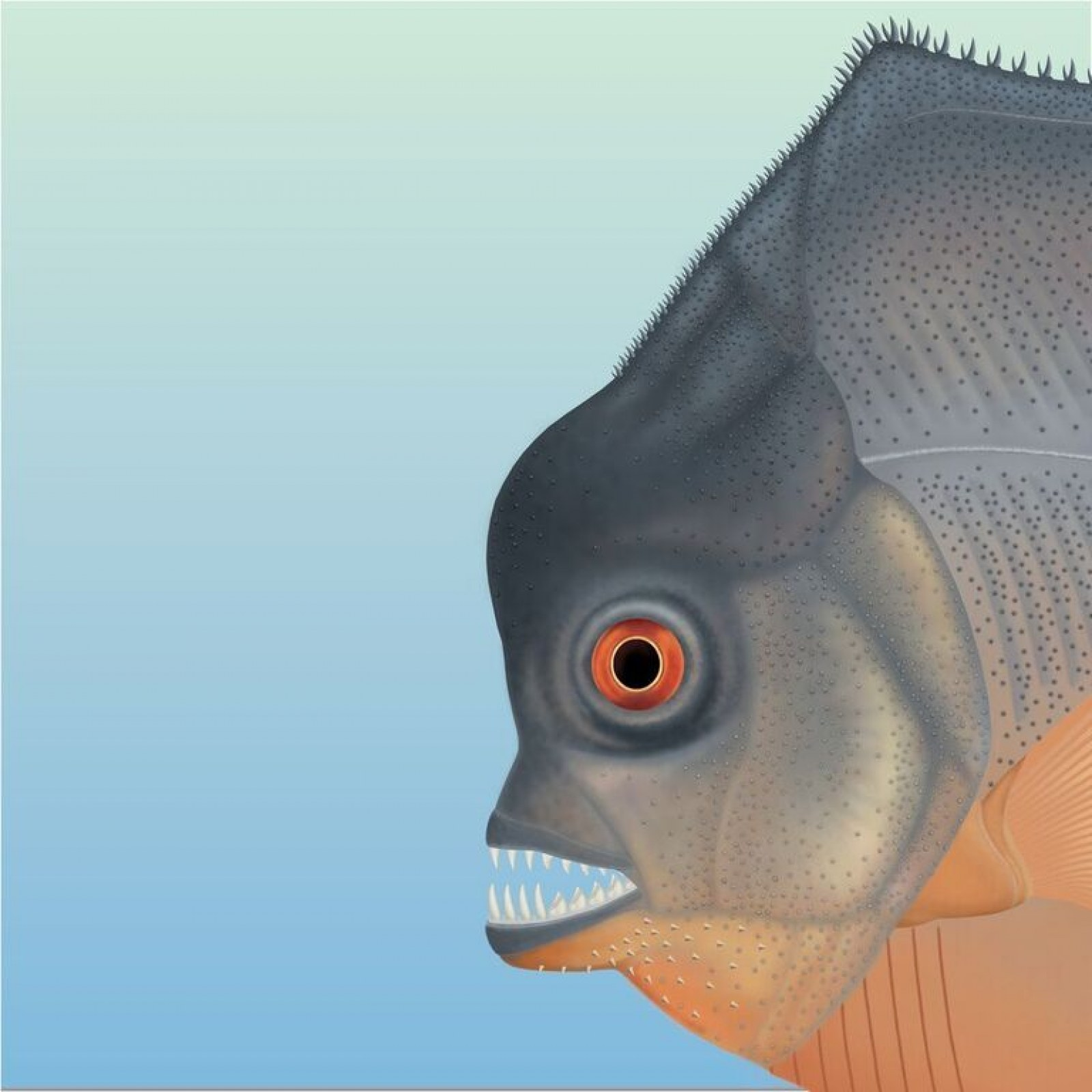 Ancient Flesh-Eating Piranha-Like Fish That Lived Alongside