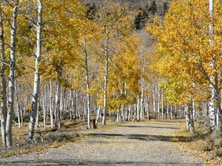 Pando Aspen Clone: World's Largest Single Organism Is Dying on Mankind's Watch