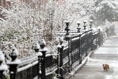 snowwy dog