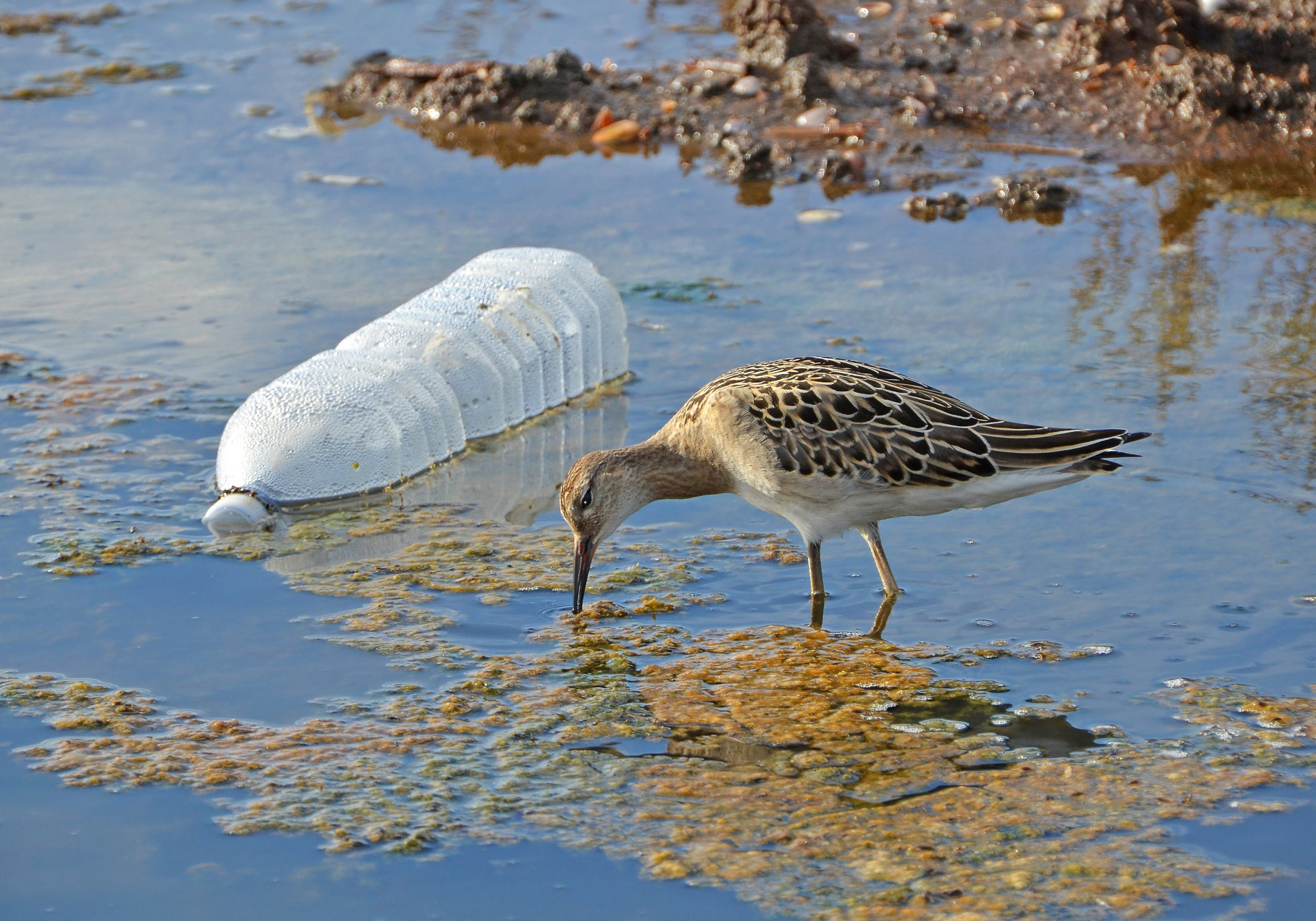plastic bottle bird