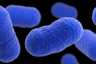 listeria bacteria close up