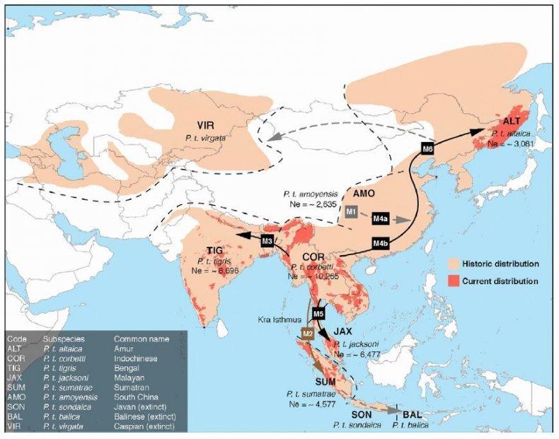 tiger distribution