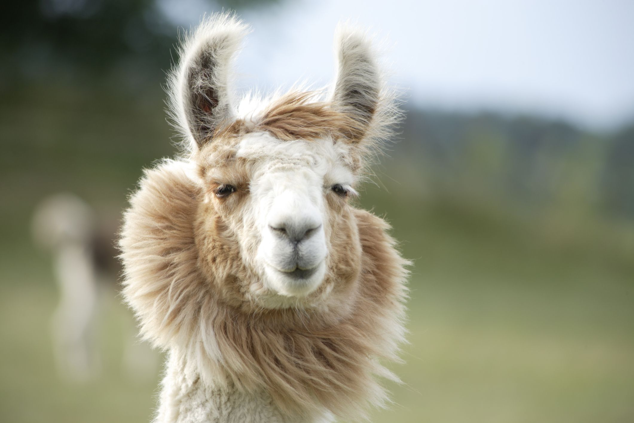 10_26_Llama