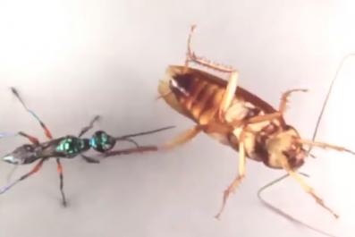 cockroach karate