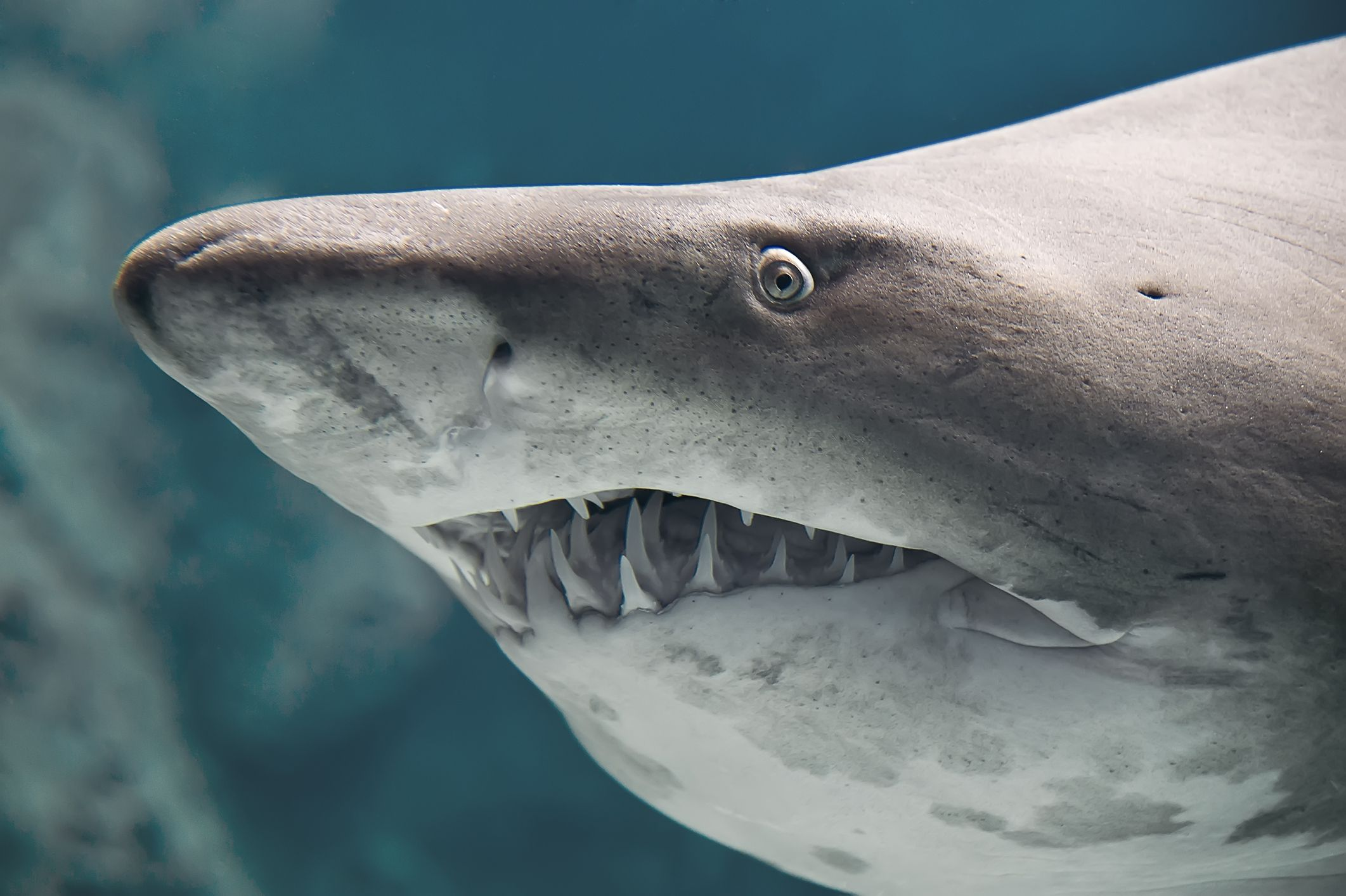 Dad Who Barely Survived Shark Attack: 'They Are Just