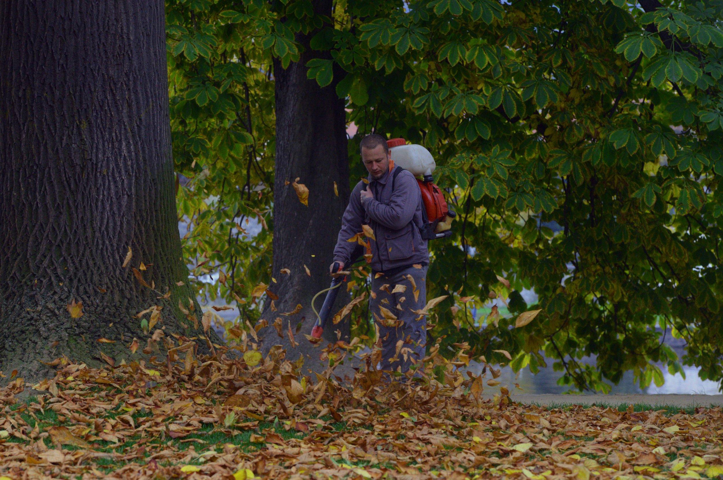pornhub fall leaf campaign