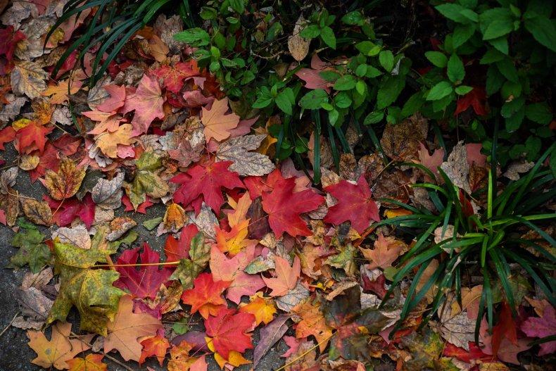 november leaves on ground