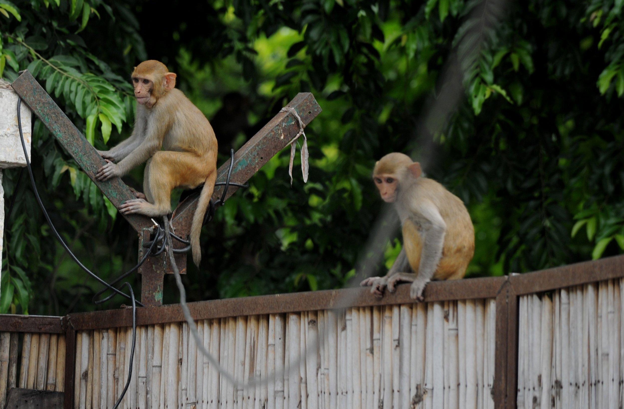 monkey florida herpes b