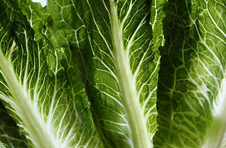 lettuce e coli