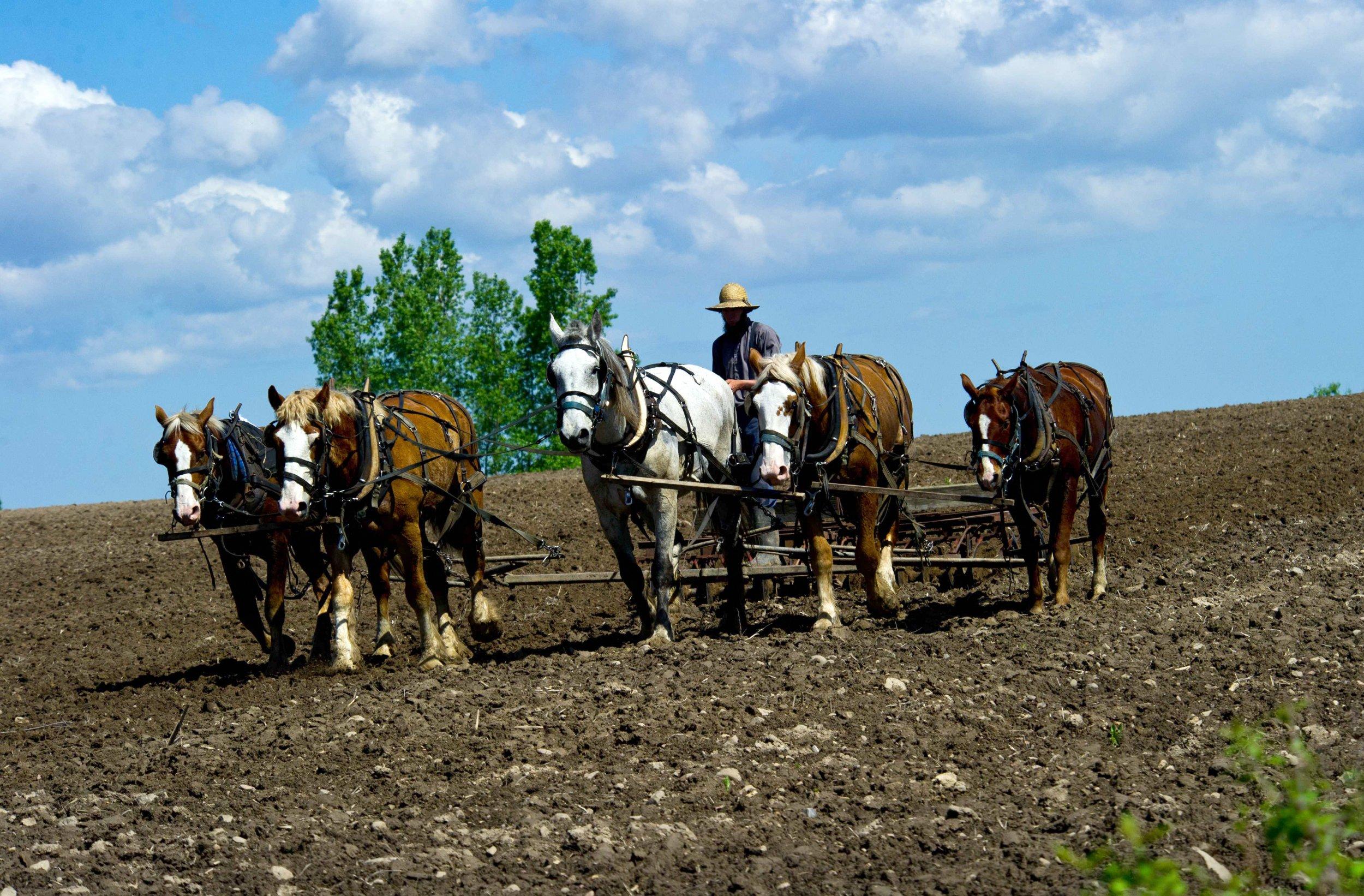 11_22_Amish