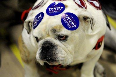 trump pence dog