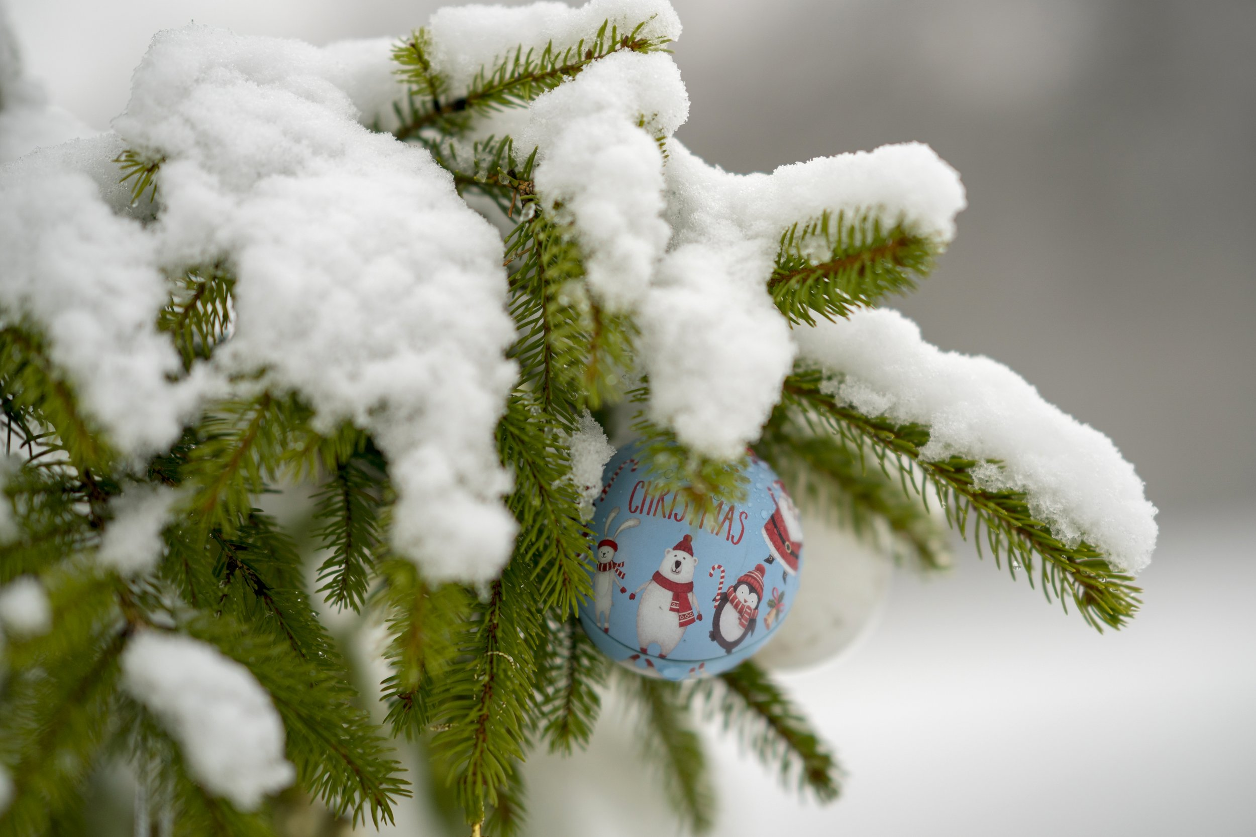 chrtsimas tree and snow