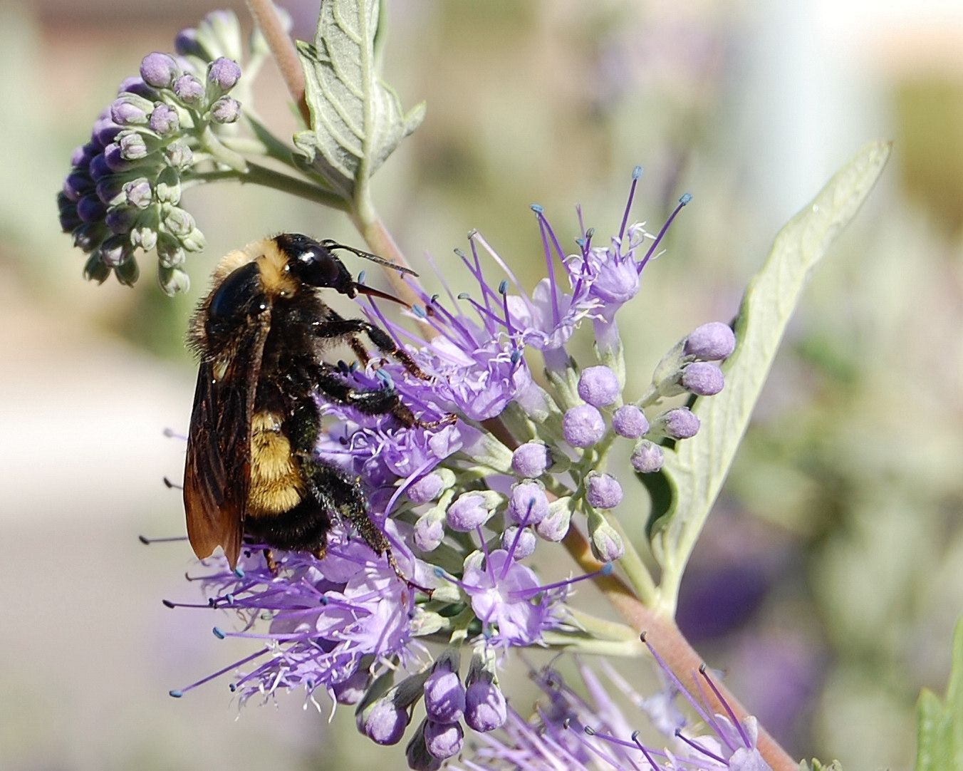 Wild Bees Are Dying and Ecosystem Collapse Will Follow—But Nobody's Taking Notice