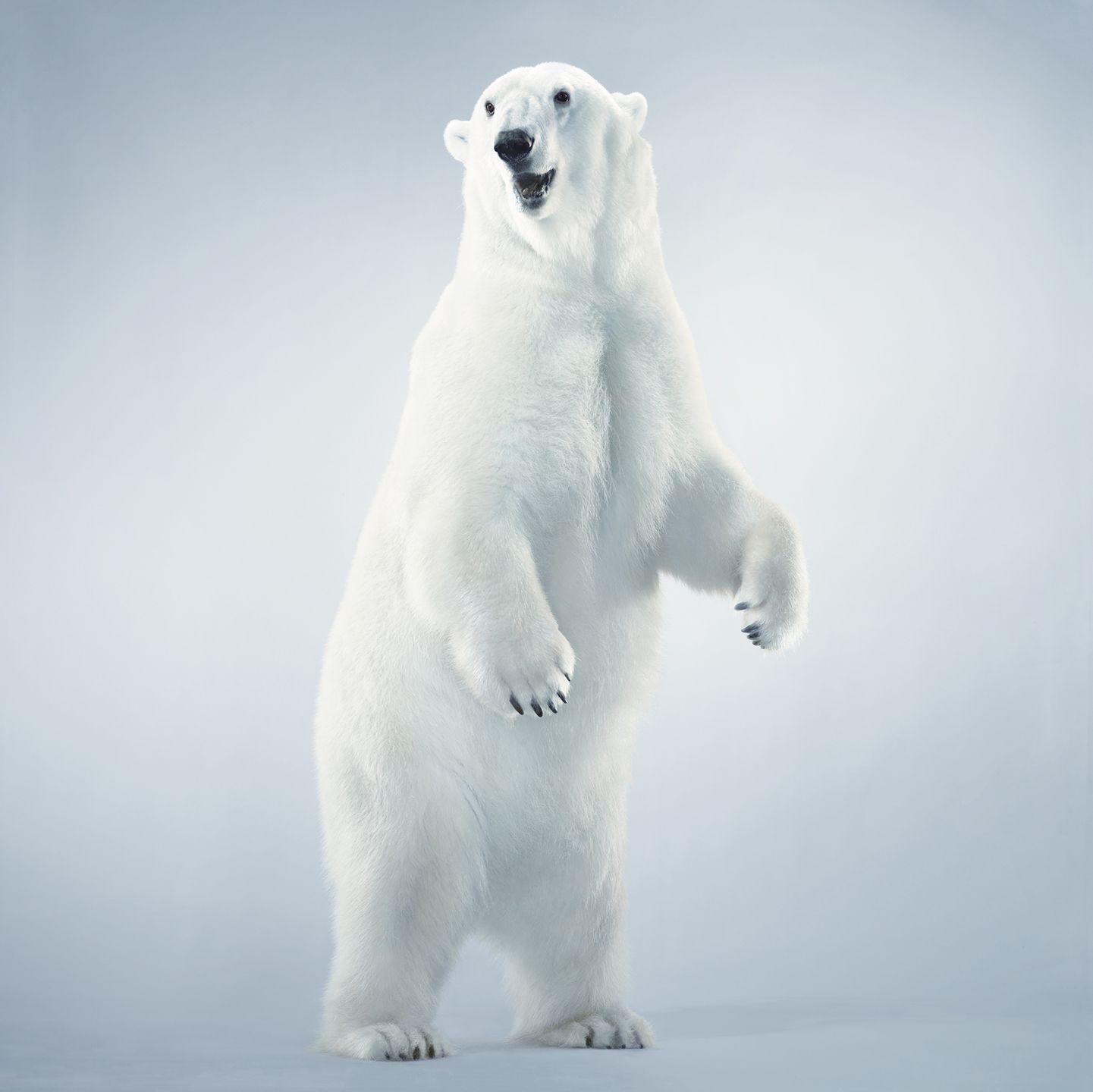 HOR_EndangeredSpeciesAct_03_161939671
