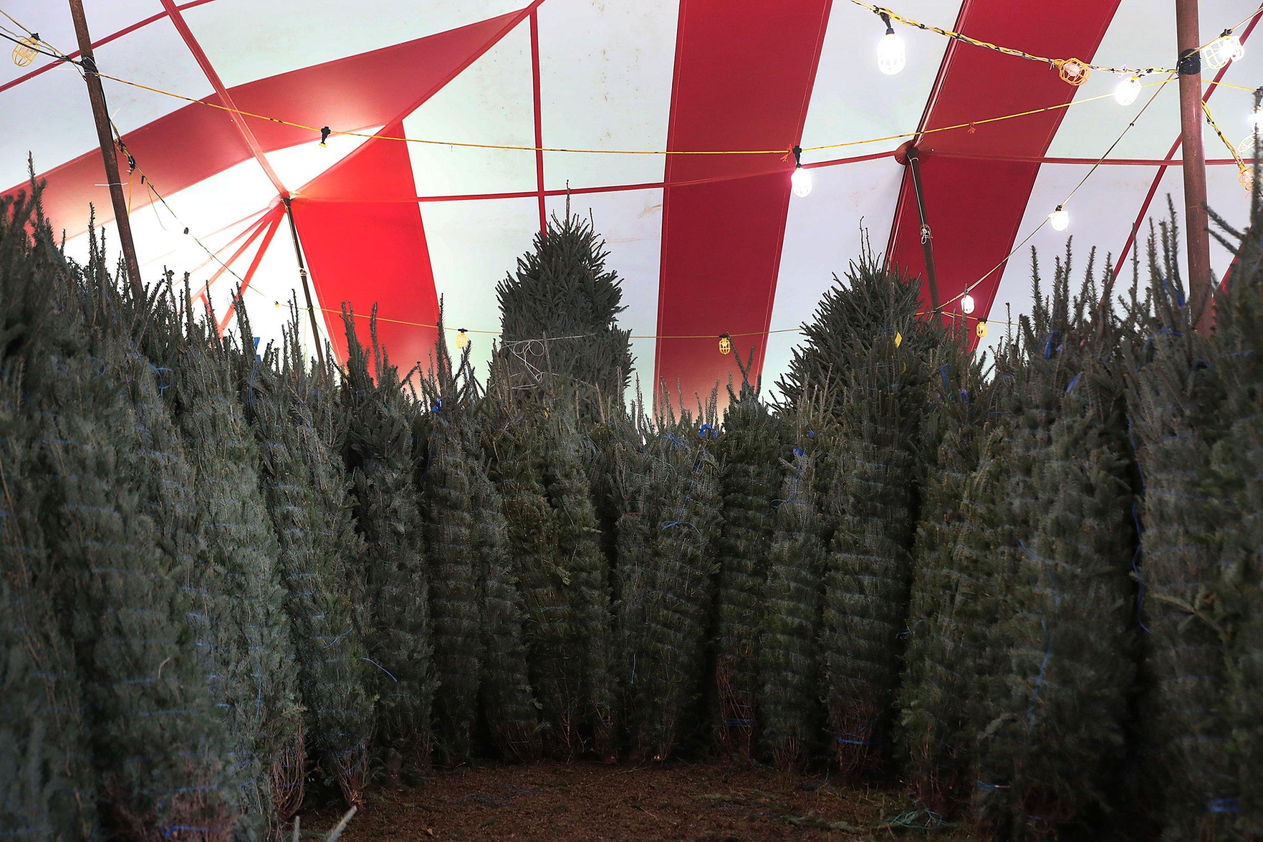 How to Keep Your Christmas Tree Alive All Holiday Season: Tips ...