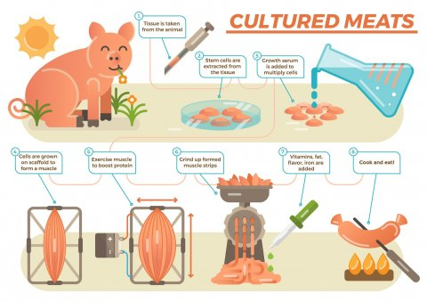 artificial meat