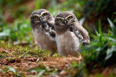 12_3_Owls_01