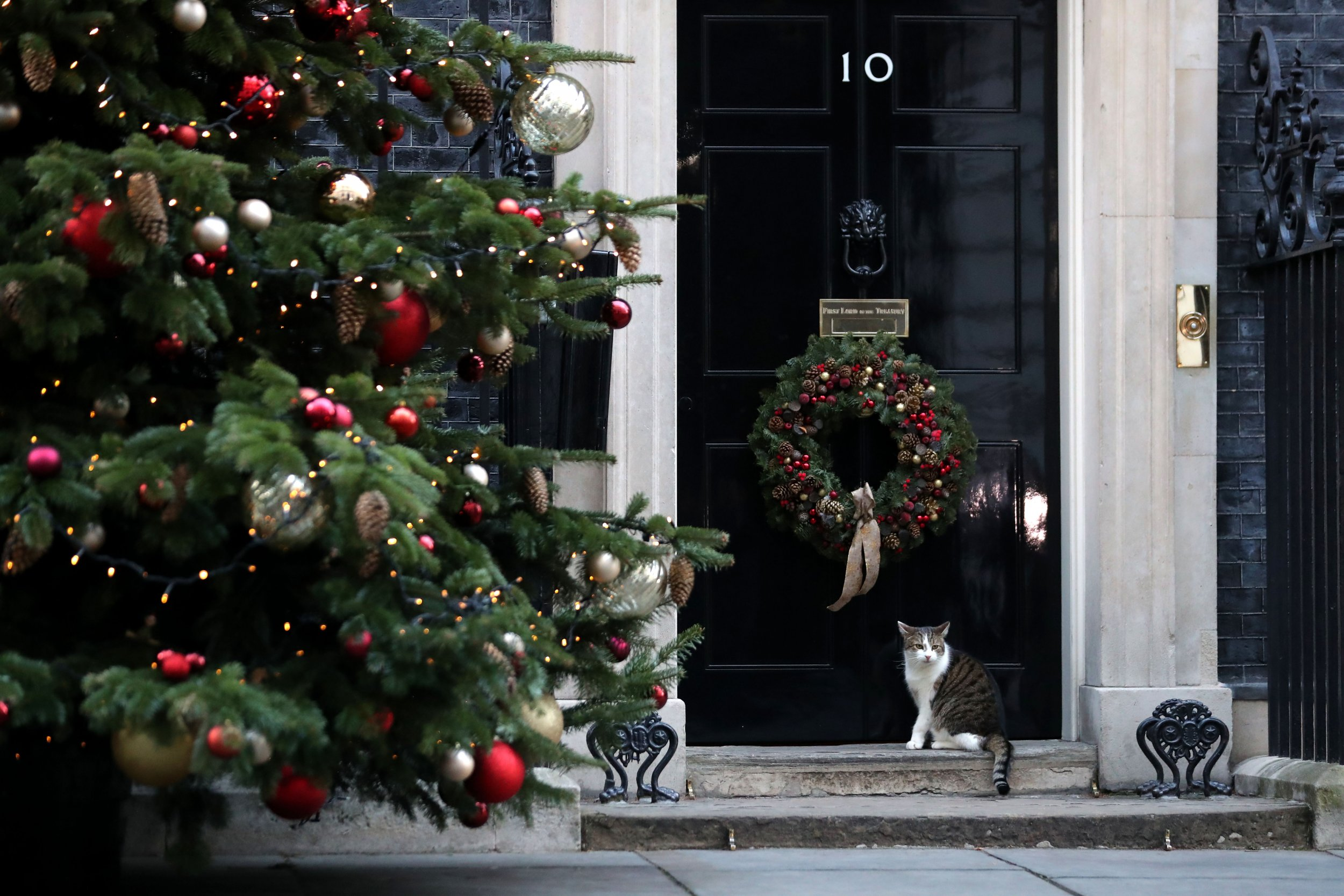 Are Christmas Trees Poisonous to Pets? Keep Your Furry Friends Safe ...