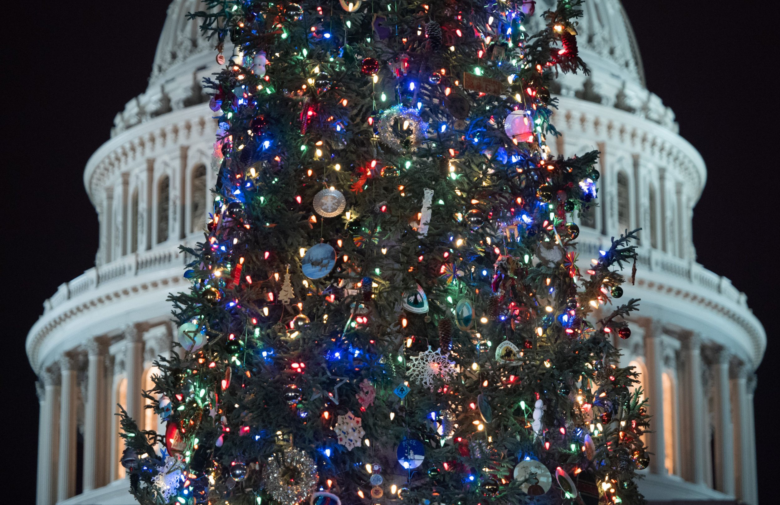 Are Christmas Trees Pagan? Inside The Origins Of The