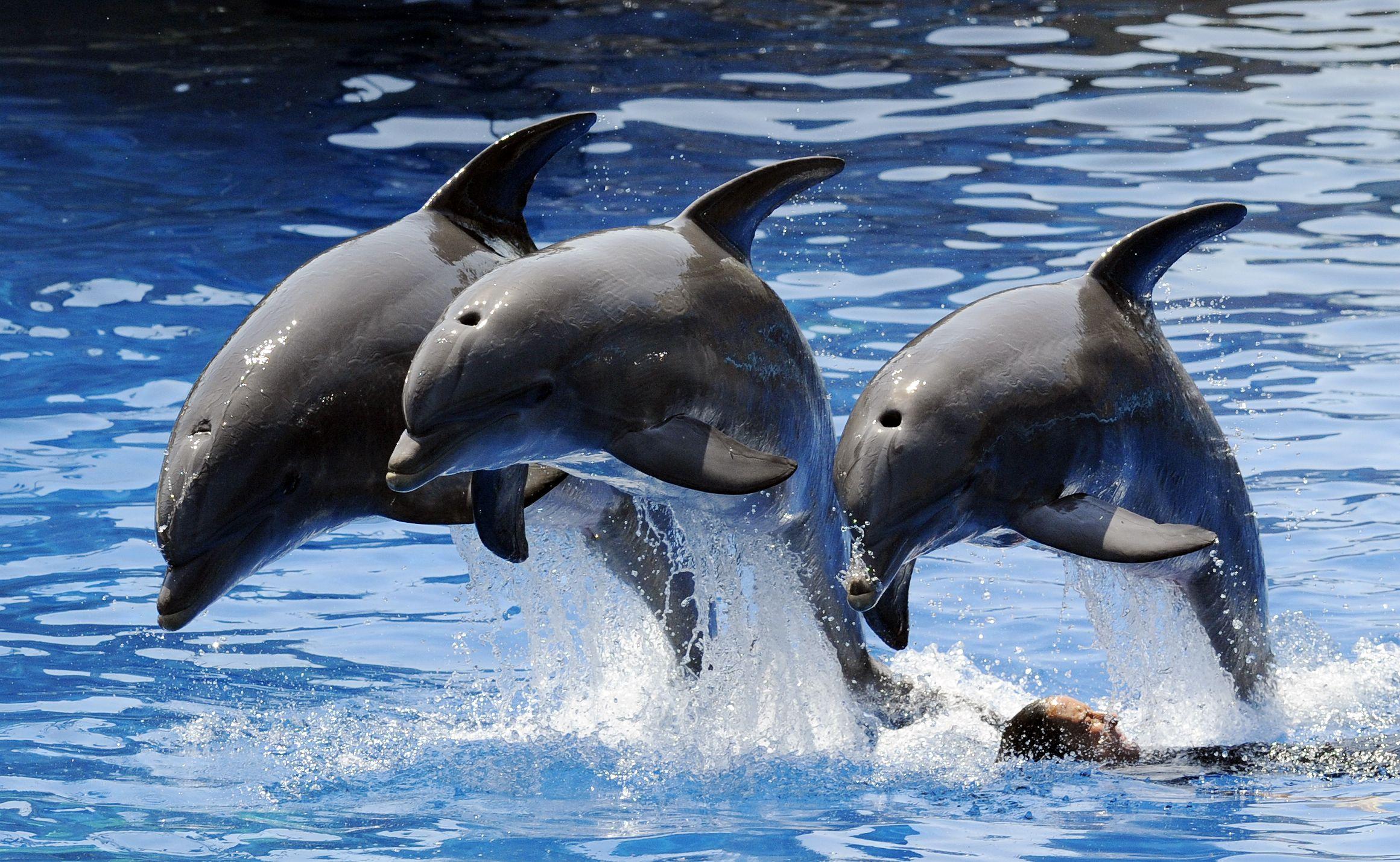 Dolphins, captivity