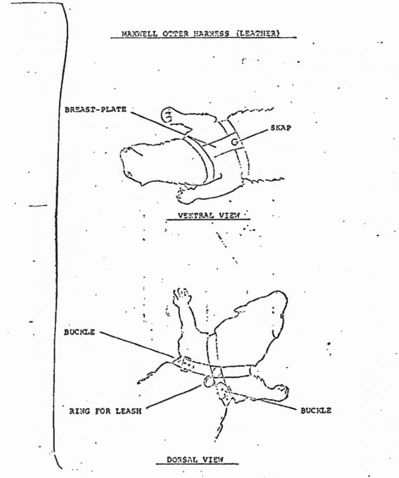 otter-harness-cia-mkultra