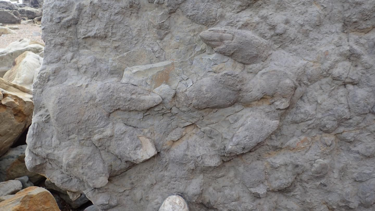 Dinosaur footprints, science, dinosaurs, ancient footprints, geology, paleontology