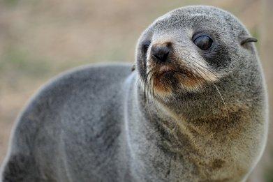 seal pups decapitated new zealand